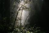 4681 Mossy Redwoods.jpg
