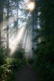 4700 redwoods family.jpg