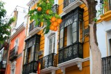 8046 Seville Architecture and Oranges.jpg