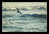 seagull @ playalinda beach II