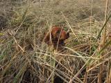 Otis In The Dune Grass