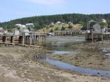 Frenchboro Low Tide
