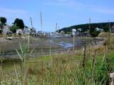 Lunts Harbor