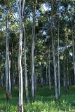 Rehabilitation Forest 15/03