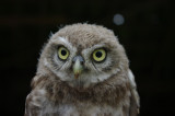 Ronald van Harxen en Pascsal Stroeken checken de nestkasten