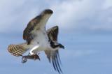 vogels van Bonaire