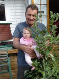 This pohutukawa tree is planted with my whenua
