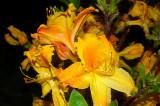 'Arneson Golden Solitaire'