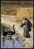 Black Swans Sahara Lommel