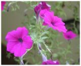 Flowers 7 (Raw Image)