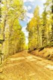Aspens, Gunnison National Forest