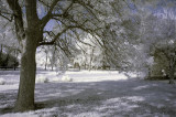 D70s Infrared
