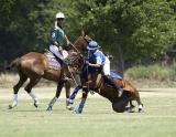 Horse Wreck!