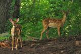 Backyard Scenes 2009