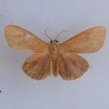 8118 – Virbia opella ***
