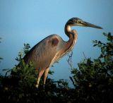 birds_delta_po_river