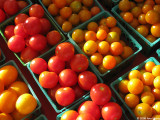 Cherry tomatoes early morning