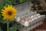 Sunflower and eggs