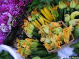 Squash blossom flowers