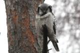 Bird photos 2008