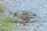 Bird photos 2009