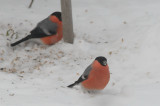 Bird photos 2010