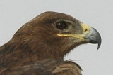 Indian Birds 2008