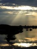 Rays on the Marsh