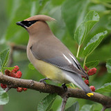 My Bird List