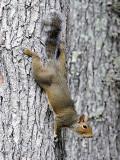 Just Hanging Around