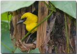 Passeriformes Gallery