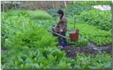 Traditional farming, Fuzhou