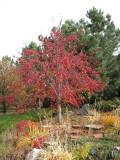 2010_fall_colors