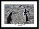 Penguins Conversation 2