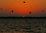 sunsetbirds.nt2333.jpg