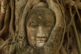 Buddha in tree.jpg