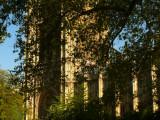 Hidden by foliage web.jpg