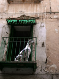 Ceramic dog web.jpg