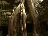 Jungle temple of Ta Prohm.jpg