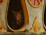 Kitten in temple LP.jpg