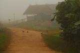 Chickens in fog Muang Sing.jpg