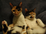 Snickers and Spot