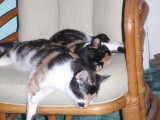 Spot and Snickers sleeping