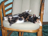 Spot and Snickers sleeping, awww