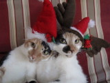 Snickers and Spot in holiday hats.