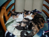 Spot and Snicks sleeping