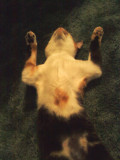 Snicks sleeps in the funniest positions!