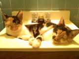Snicks and Spot in the sink, lol!
