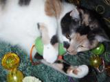 Spot loves the catnip mouse...