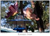 Butterfly Light - 7788 05Dec01